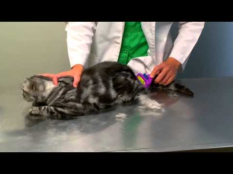 Hairball Prevention Video featuring Veterinarian, Dr. Holly Pollack
