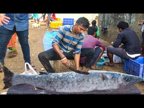 Xxx Mp4 Live Big Fish Cutting Skills 2019 Indian Fish Market Fisherman 3gp Sex