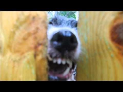 Pissed off dog:  Mad dog, Barking dog, dangerous dog, hungry dog