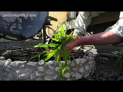 How to create a Japanese garden in under 3 minutes