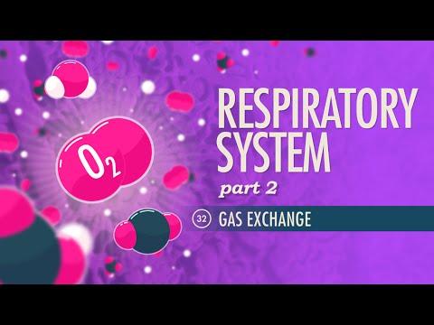 Respiratory System, part 2: Crash Course A&P #32
