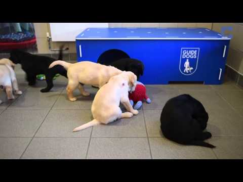 Guide Dogs Complete Training