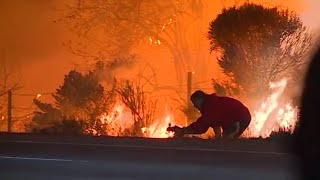 Man jumps out of car to rescue wild rabbit from raging Californian wildfires