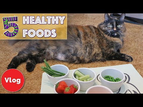5 Foods You Didn't Know Were Good For Your Cat! Vegetables and Fruit That Your Cat Can Eat!