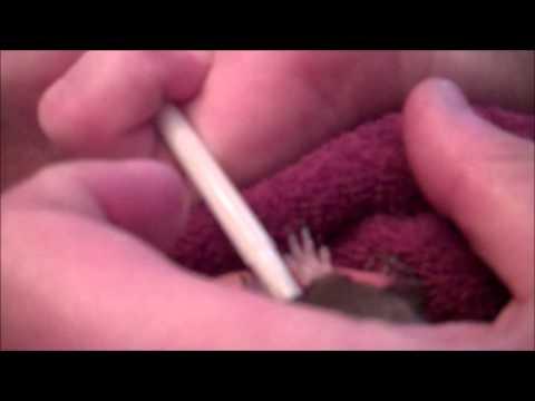 Feeding Peanut - Baby Squirrel