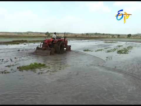 Mechanized Sri cultivation in paddy