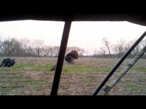 Greg Fell Turkey Hunt