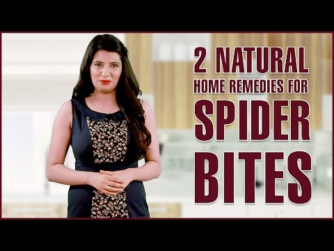 SPIDER BITES TREATMENTS & REMOVAL – Get Rid Of Itching & Infections