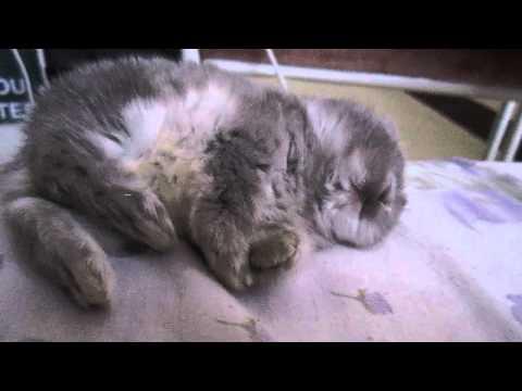 bunny falling asleep slowly