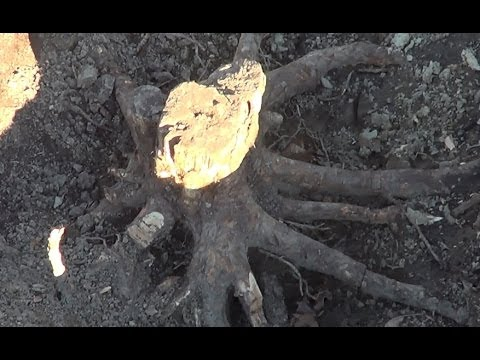 Stump removal without using a stump grinder. How to remove a small stump.