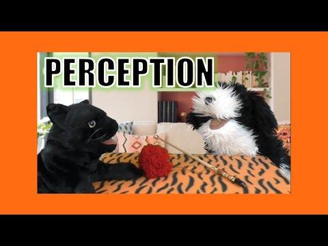 Perception:  George the Self Esteem Cat