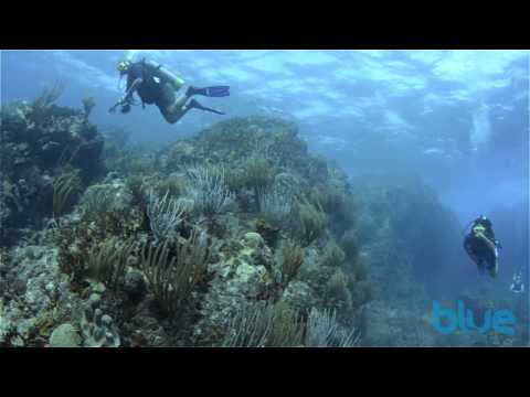 Diving the British Virgin Islands