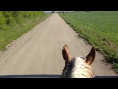 Ways to Handle a Buddy Sour Horse - Herd Attacks New Horse - Normal Horse Behavior