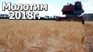 Начали молотить пшеницу| Нива СК-5 #Сельхозтехника ТВ
