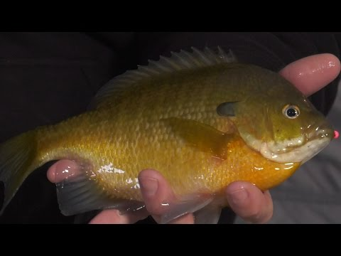 First Ice Panfish - In-Depth Outdoors TV, Season 11 Episode 5