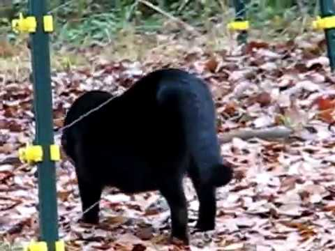 Cats Gets SHOCKED By ELECTRIC Fence