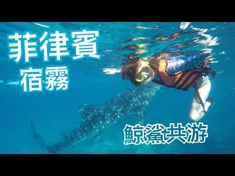 【鯨鯊共游-菲律賓-宿霧】Philippines   Cebu • Oslob • Bohol