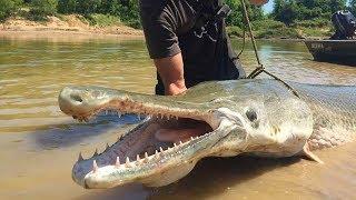 İnsanların Amazon Nehrinde Yakaladığı En Büyük 7 Su Hayvanı