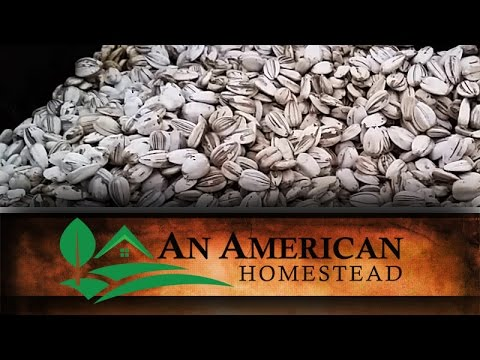 How We Harvest and Eat Sunflower Seeds - An American Homestead