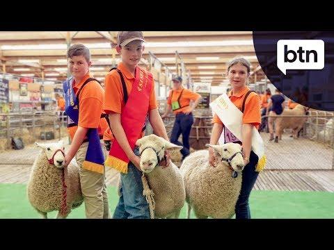 Sheep Expo - Behind the News