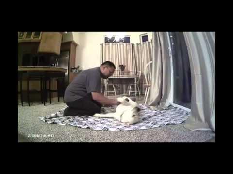 muddy dog routine