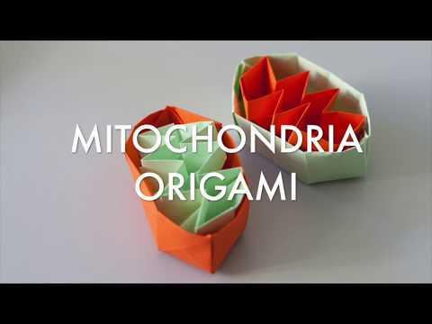 Mitorigami - How to make mitochondria origami (Tutorial)