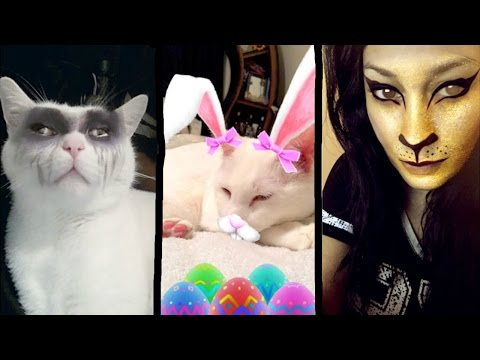 CAT FILTER FACE | SNAPCHAT FILTERS ON A CAT