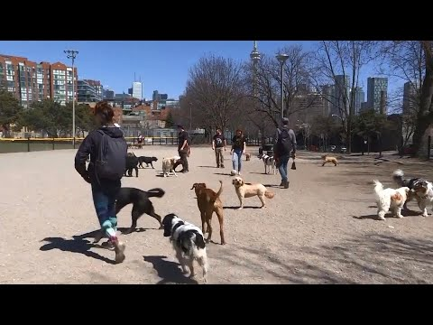 Local start-up to launch app that connects owners and dog sitters