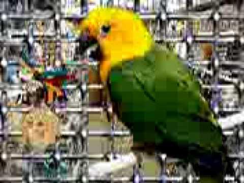 Bird Flu Parrot 13660