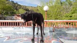 Dog Shelter completely destroyed - Georgia, Tbilisi