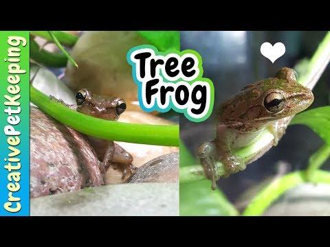 Mark the Cuban Tree Frog