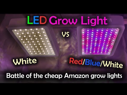White LED vs Red Blue White LED Grow Test - Amazon Lights (Intro)