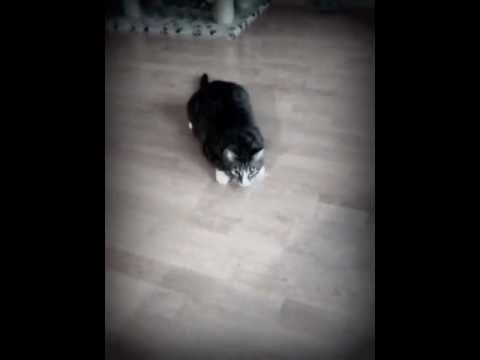 Cat backflip