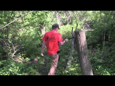 A tour of a Man Made Deer Bedding Area Created by Hinge Cutting Trees