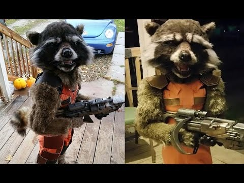 Best Halloween costume yet? Rocket Raccoon outfit made by Mom  Goes Viral 2015