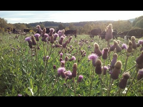 Holistic Farming Supports Pollinators,  Sadly Most Farms Do Not