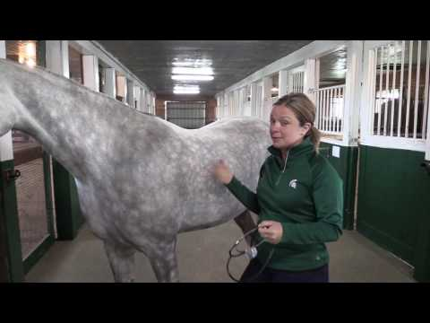 How to Take a Horse's Heart Rate