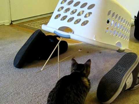 Funny Kitten Trap, kitty cat deadfall trap.