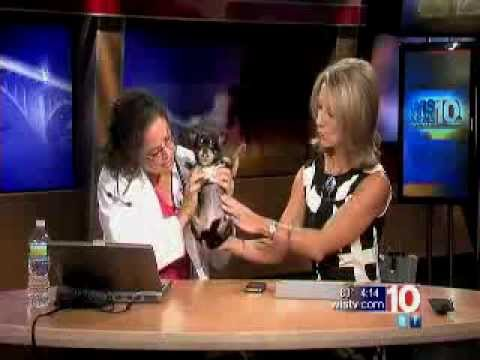 Dr. Wendy King on Canine Breast Cancer