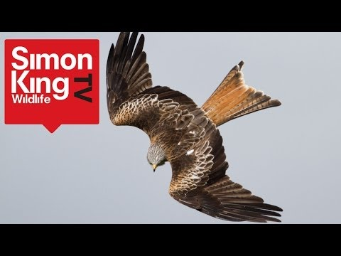 iPhone 5s Slow-Motion Filming Raptors How To