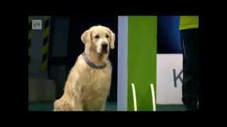 El perro campeón de desobediencia