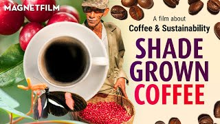 SHADE GROWN COFFEE (Official Trailer) HD1080