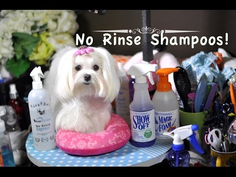 GROOMING:  Maltese No Rinse Shampoos for Quick Cleaning Pee Stains, Paws & Face~ Maltese Grooming