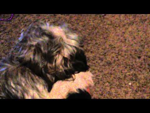A cute puppy biting my toe