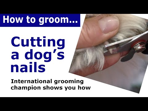 How to cut dog nails | dog grooming demonstration