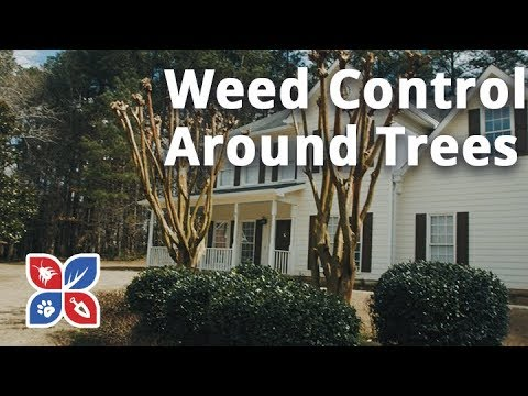 Weed Control Around Trees - Lawn Care Maintenance Tips | DoMyOwn.com