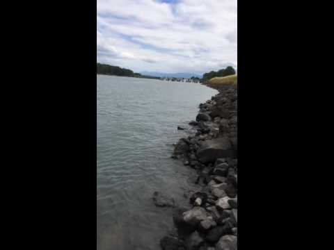 Columbia river crawfish