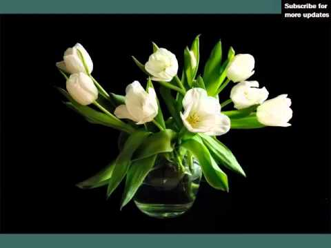 White Tulips In Vase | Beautiful White Folwers Images