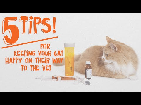 How to Keep Cats Happy On Their Way To The Vet