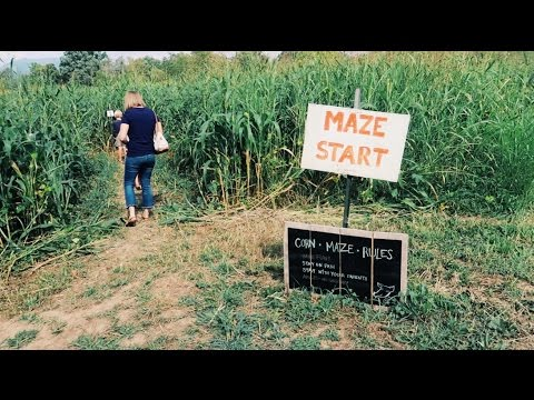 Corn Maze FUN!!!